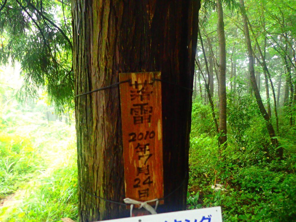 落雷を受けた木