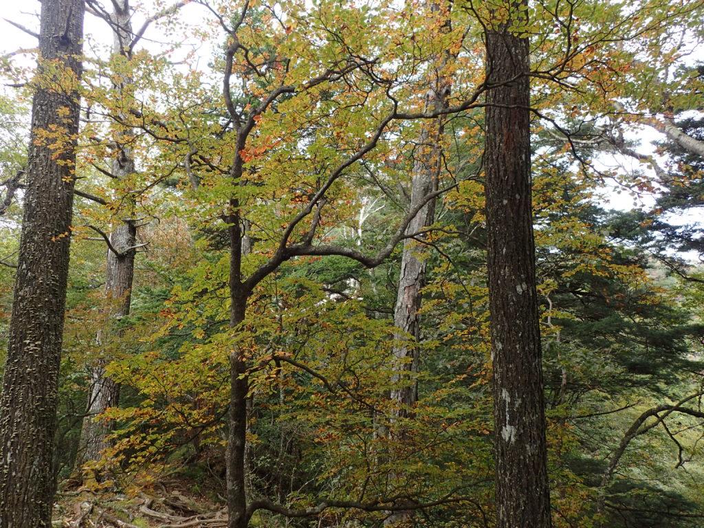 紅葉している木々