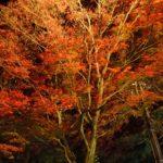 筑波山のライトアップされた紅葉を見てきました。