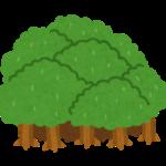 森林浴の驚きの効果5つとおすすめの森林浴スポットを紹介