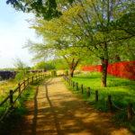 多摩丘陵 よこやまの道 変化に富んだ魅惑のトレイル