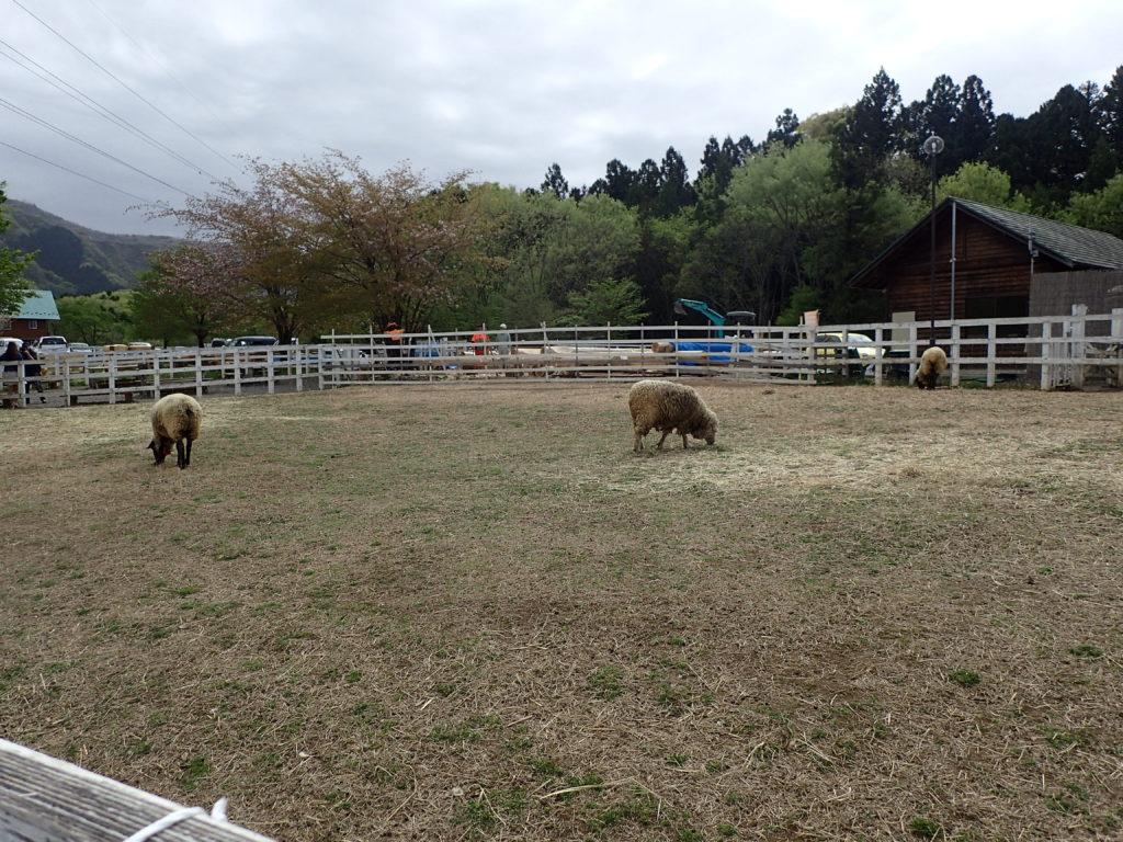 羊山公園へ