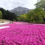 琴平丘陵ハイキングコース お寺と花の魅力溢れるコース