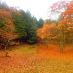 ウノタワ  紅葉が美しい奥武蔵の秘境へ