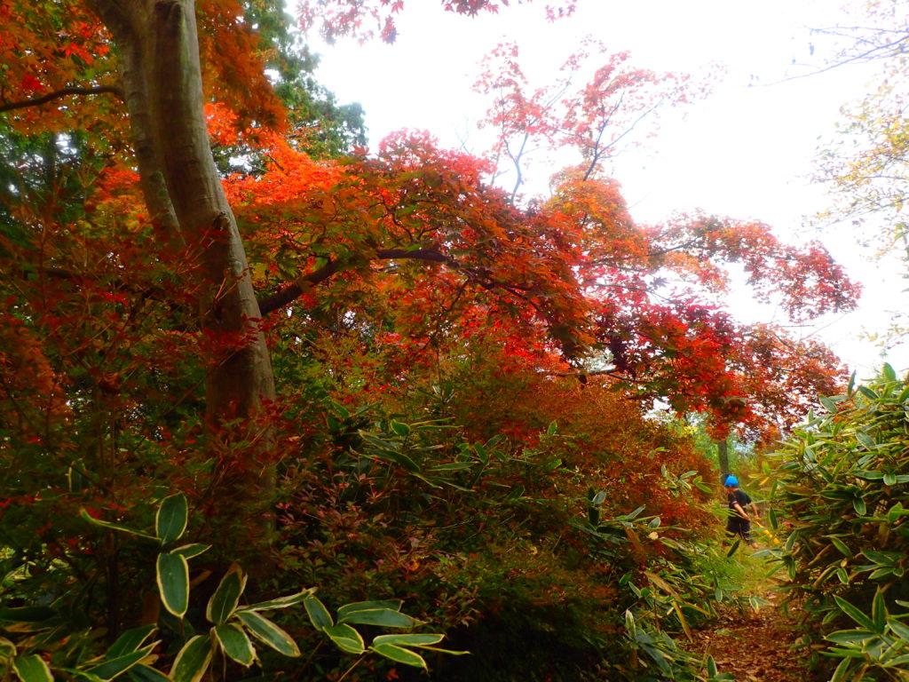 秋の天覧山