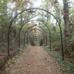 宮沢湖外周 ハイキングコース 程よい起伏と豊かな自然
