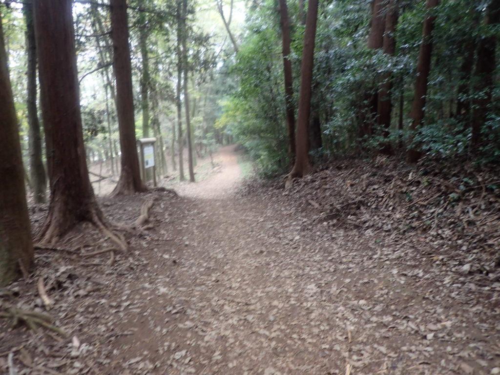 宮沢湖ハイキングコース