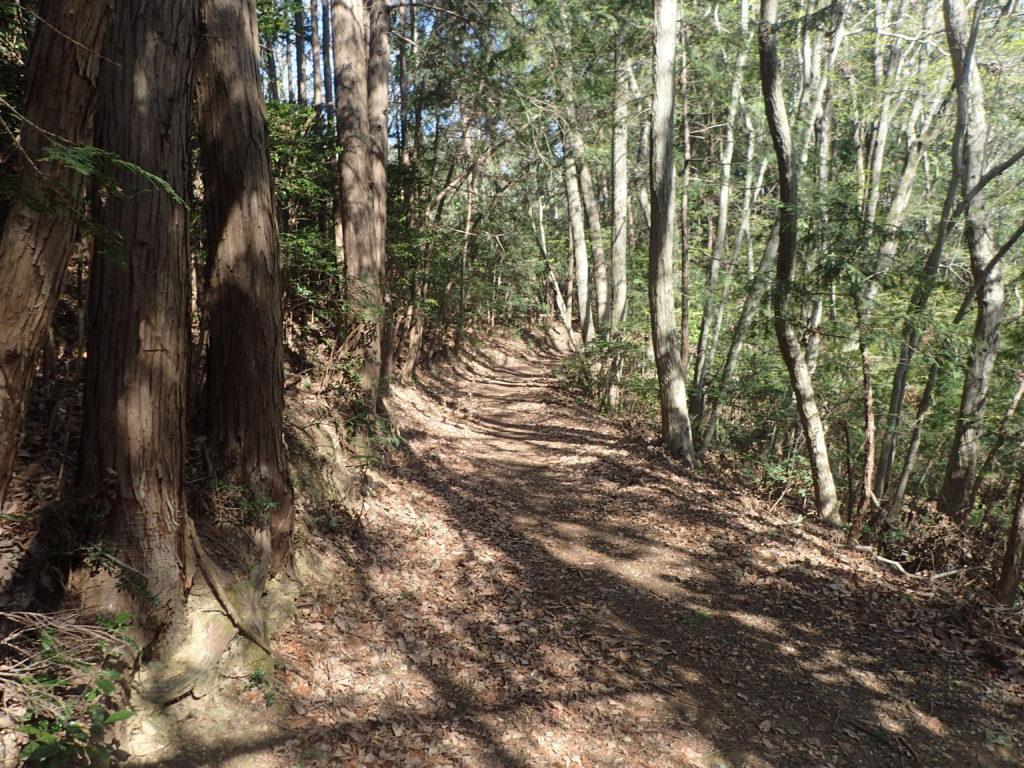 基本はこのような樹林帯のフラットなトレイル。適度なアップダウンが心地い。
