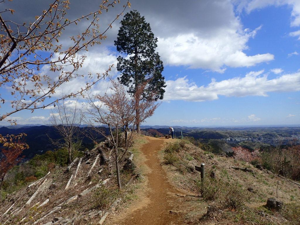 山頂に一本だけ残っている杉の木が特徴的