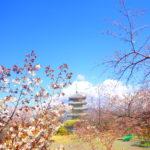 沼津アルプス全山縦走 桜、海、海鮮全てを楽しめる