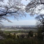 滝山城跡 都内有数の桜の名所でお花見ハイク