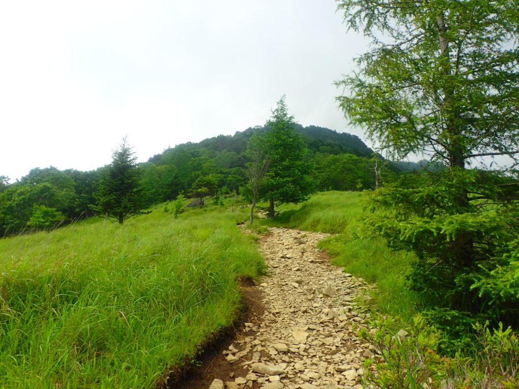 草原トレイル