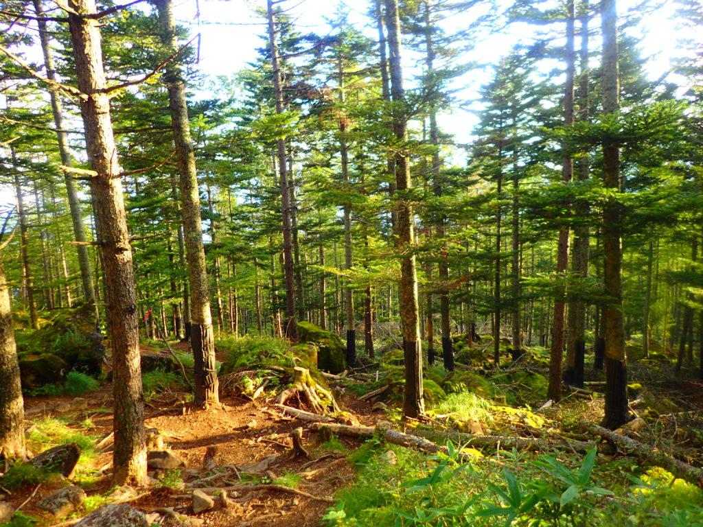 夕日に染まる森
